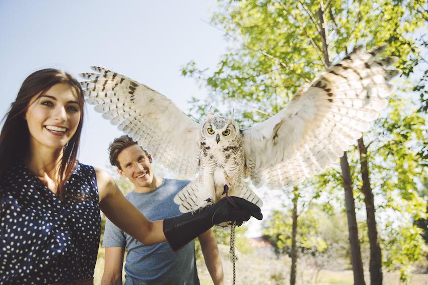 Alberta Birds of Prey Centre / Sabrina Hill/Travel Alberta